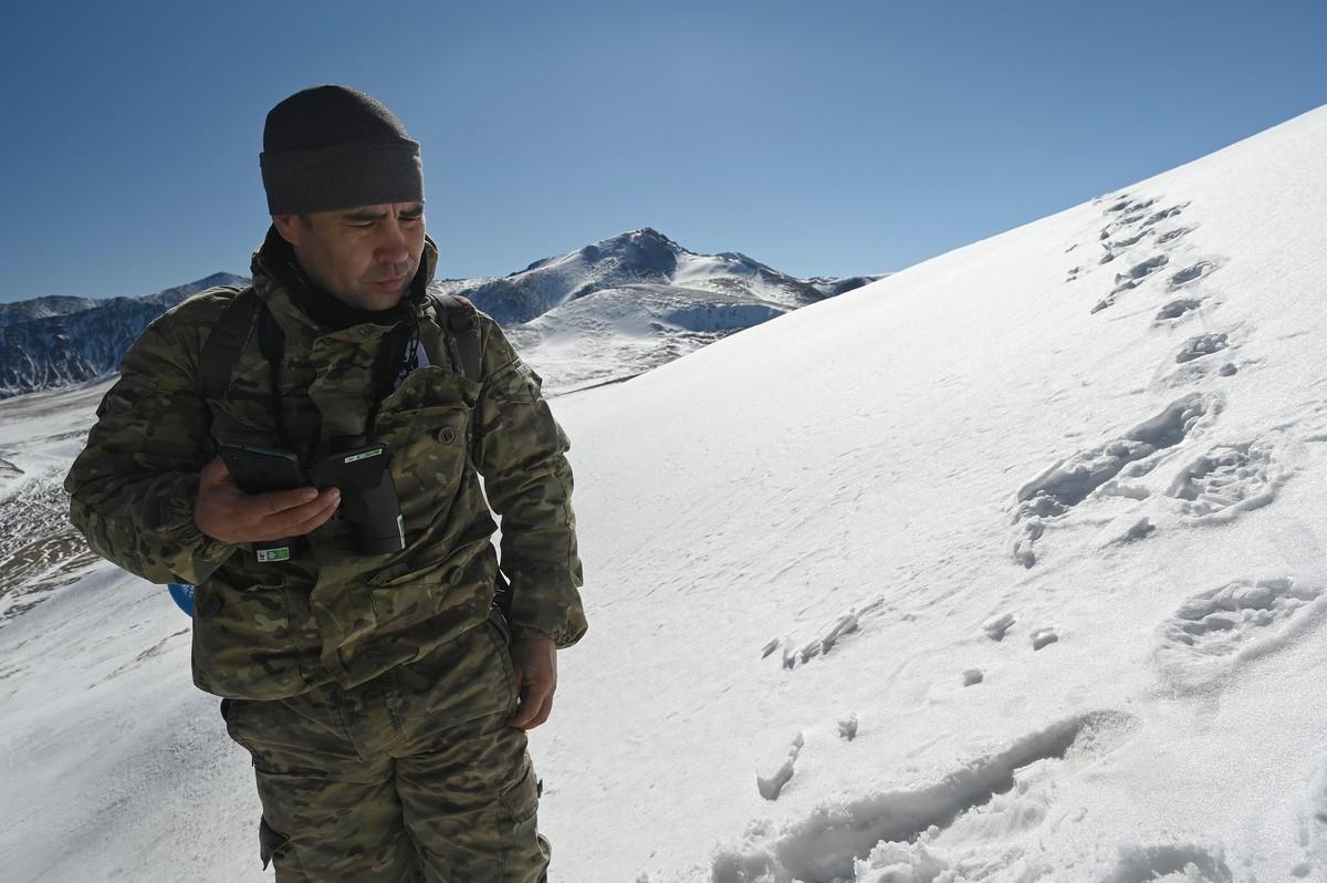 Предварительные результаты экспедиции по учету барса в Бурятии показали, что на хребте Восточный Саян обнаружены следы как минимум двух самцов и самки.