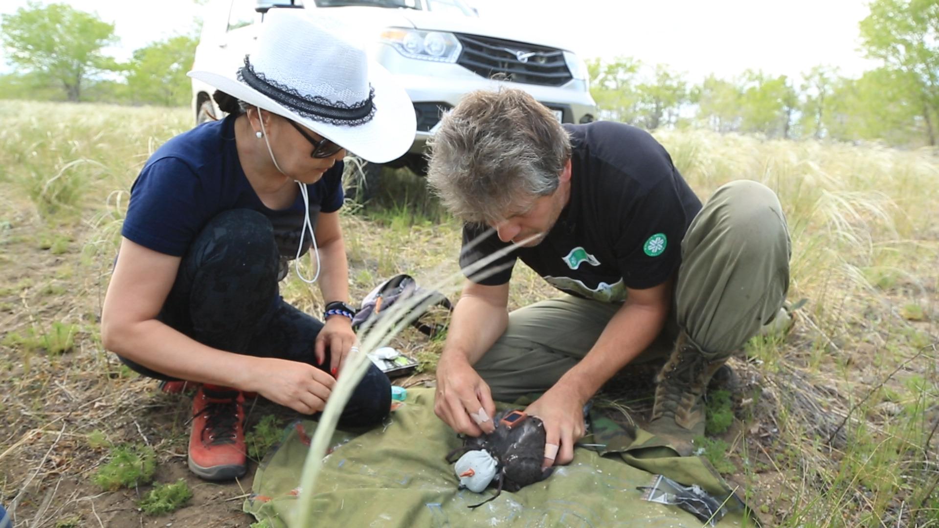 Исследование проводилось орнитологами в рамках совместного проекта WWF России и фонда «Мир Вокруг Тебя» Корпорации Siberian Wellness.
