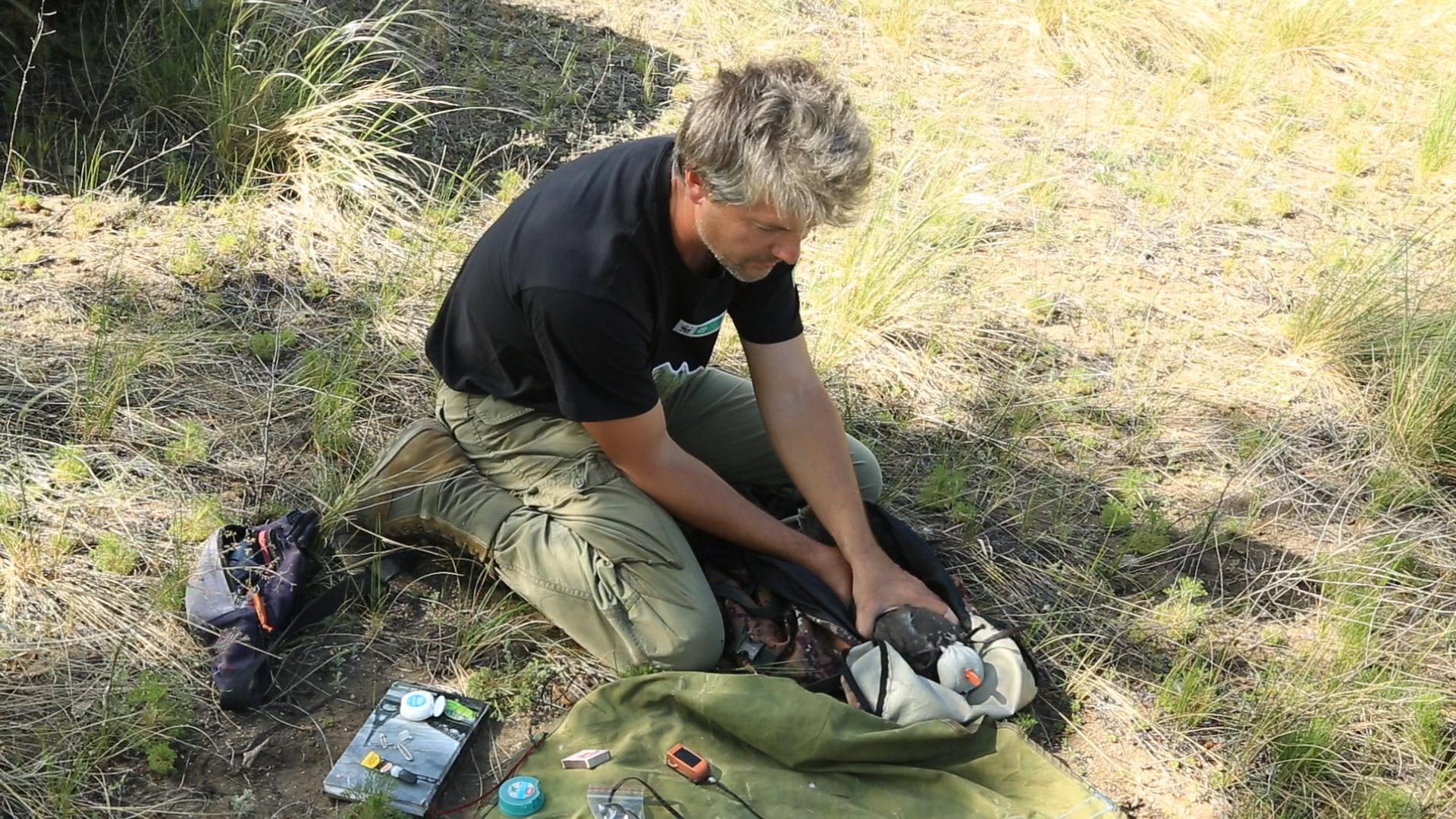 За последние десятилетия численность степного орла чрезвычайно сократилась, а гнездовой ареал вида сжался.