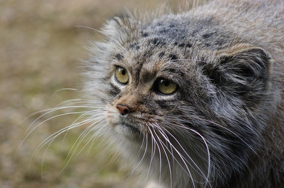 Вы котика не видели?