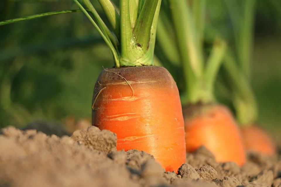 Польза моркови для похудения