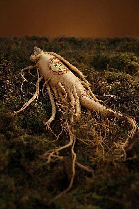 Многолетнее травянистое растение с утолщенным корнем серовато-желтого цвета отличается приятным ароматом.