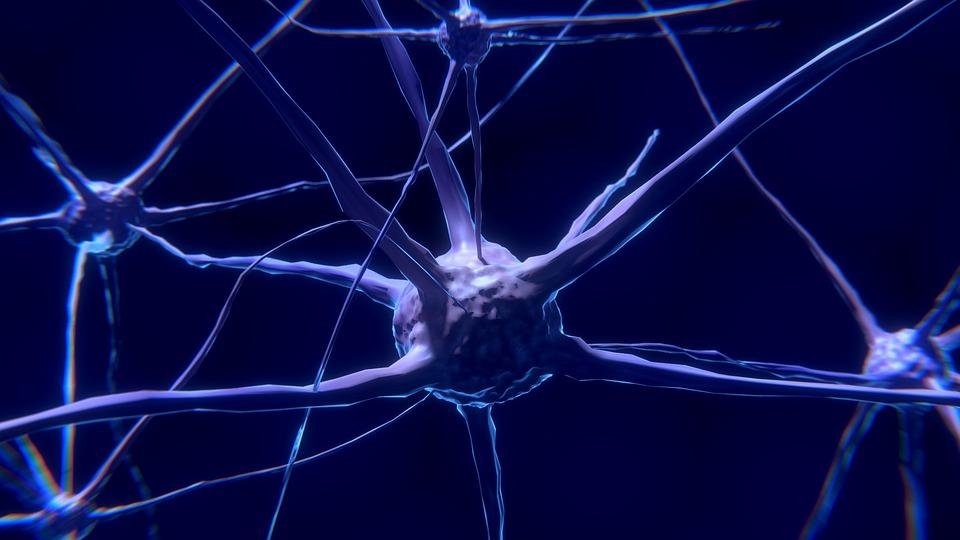 Витамины группы B являются водорастворимыми веществами, которые поддерживают обменные процессы организма, работу центральной нервной системы и мышечного аппарата.