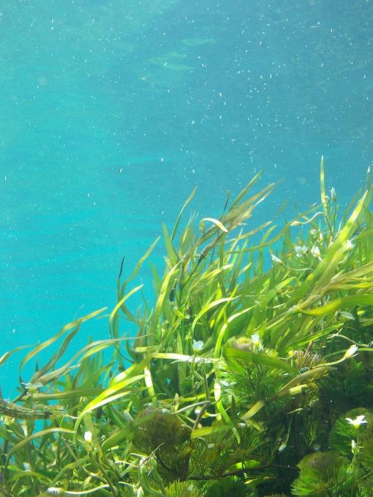 Микроэлементов и йода в морских водорослях больше, чем в других морепродуктах